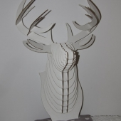 Stag-IMG_6582