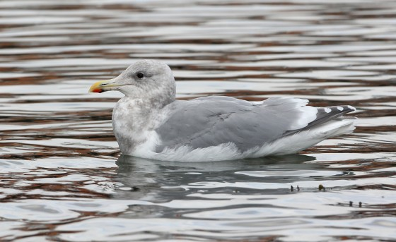 A Beautiful Beast