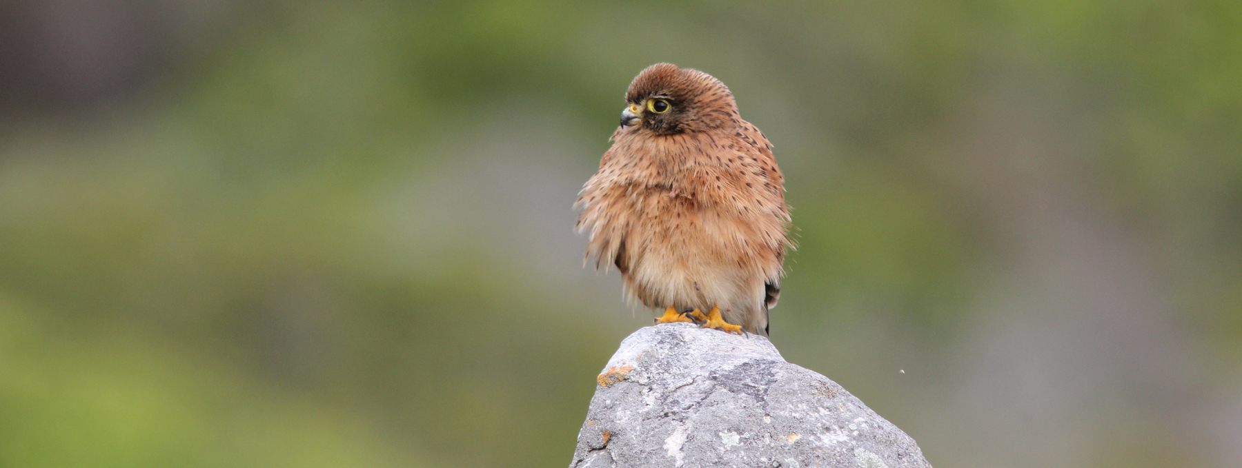 SliderRock-Kestrel-slider-220313_2389